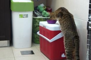 Stealing food!